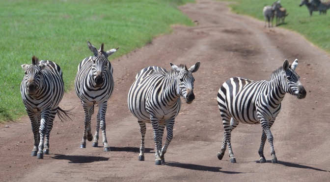 Kili – Tarangire und Ngorongoro Crater